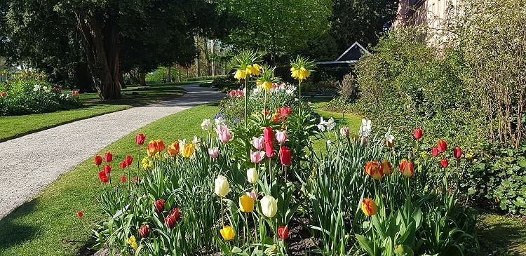 Frühling im Schlossgarten im Februar 2019!